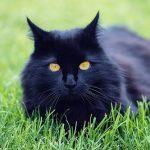 黒猫が逃げたり、話す二つの夢占いの意味とは?