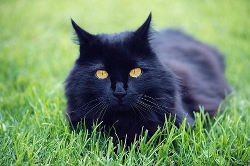 夢占い 黒猫 逃げる 話す