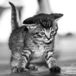 子猫や子犬を育てる二つの夢占いの意味とは?