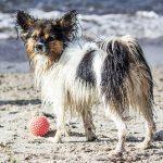 海で遊んだり犬と遊ぶ夢占いについて