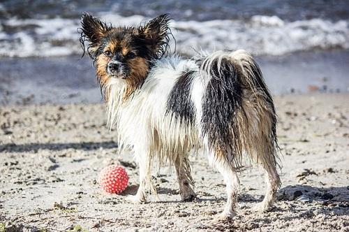 夢占い 海 犬 遊ぶ