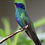 鳥のくちばしが印象的な夢や鳥のフンが出てくる二つの夢占いの意味とは?