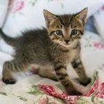 動物の出産や赤ちゃんの二つの夢占いの意味とは?