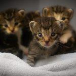 子猫が産まれる夢占いの意味とは?