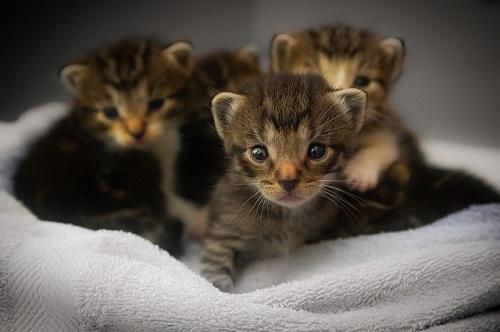 夢占い 子猫 産まれる