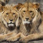 いっぱいの動物が夢に現れたり、動物に追いかけられる二つの夢占いの意味とは?