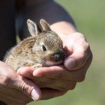 動物を助けたり、動物が話す二つの夢占いの意味とは?
