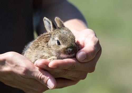 夢占い 動物 助ける 話す
