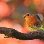 鳥や虫を育てる二つの夢占いの意味とは?