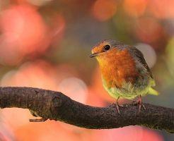 夢占い 鳥 虫 育てる
