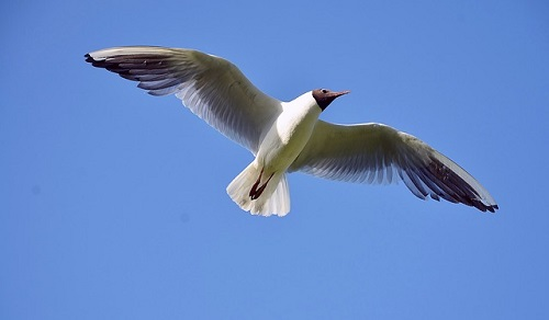 夢占い 鳥 逃がす 逃げる 大きい