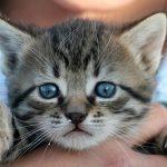 子猫が喋る1つの夢占いの意味は?