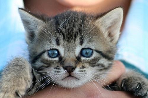 夢占い 子猫 しゃべる