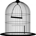 小鳥を捕まえる、逃がす夢占いの意味は?