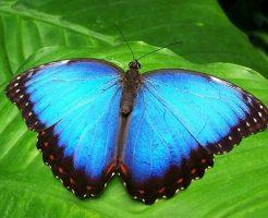 夢占い 青い蝶 車