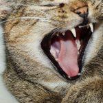 動物に噛まれたり、動物が怪我をする二つの夢占いの意味は?