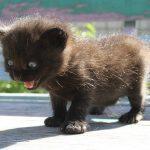 黒い子猫の1つの夢占いの意味は?