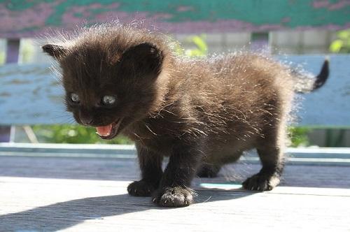 夢占い 子猫 黒