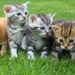たくさんの子猫が出てくる夢占いの意味は?