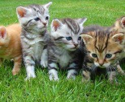 夢占い 子猫 たくさん