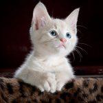 怪我してる子猫の1つの夢占いの意味は?