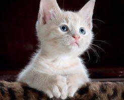 夢占い 子猫 怪我