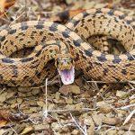 蛇や大蛇に飲まれる夢占いの意味は?