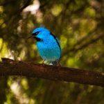 青い小鳥の夢占いの意味は?