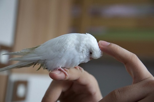 夢占い 小鳥 肩にとまる 手に乗る