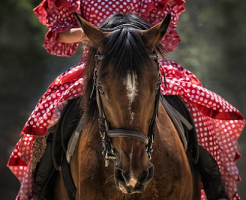 夢占い 馬 乗る 走る 見る (2)