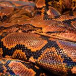 大量の蛇、蜘蛛が出てくる夢占い