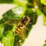 大きい蜂の夢や殺虫剤をかける夢占いの意味とは!?