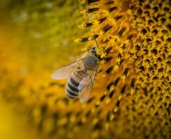 ⑧夢占い 蜂 逃げる 追われる 食べる