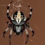蜘蛛を捕まえる夢や逃げる夢、追いかけられる夢占いの意味とは!?
