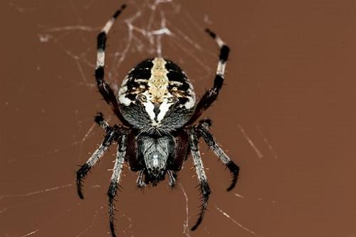 ⑦夢占い 蜘蛛 逃げる 捕まえる 追いかけられる