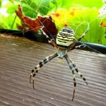 緑や黒、茶色の蜘蛛が出てくる夢占いの意味とは!?