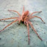 巨大な蜘蛛が出てくる夢占いの意味とは!?