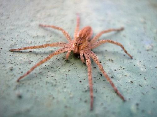 ④夢占い 蜘蛛 巨大