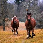 茶色や黒い色の馬の夢についての夢占い