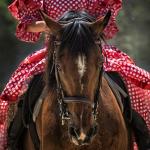 馬に乗る、馬が走る、馬を見る夢についての夢占い