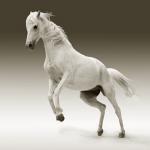 馬を助ける、糞を踏む夢についての夢占い