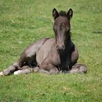 馬が出産する夢についての夢占い