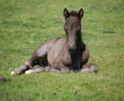 夢占い 馬 出産 (2)