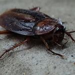 大量の虫?ヒルやゴキブリの出てくる夢占い