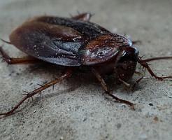 夢占い 大量 虫 ヒル ゴキブリ