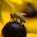 蜂に刺されそうになる夢や、刺される夢占いの意味とは!?