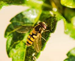 ⑨夢占い 蜂 大きい 殺虫剤