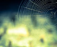 ⑥夢占い 蜘蛛 糸