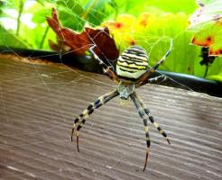 ⑤夢占い 緑 蜘蛛 黒 茶色