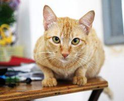 夢占い ペット 怪我 猫
